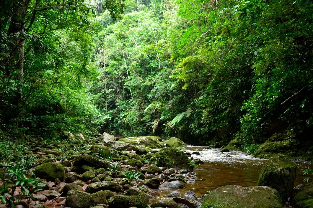 Para llegar al Centro de Rescate, hay que cruzar el río Shilcayo 15 veces saltando sobre las rocas y subir por un camino que se asemeja a escaleras naturales. Aproximadamente, la subida se realiza en dos horas.