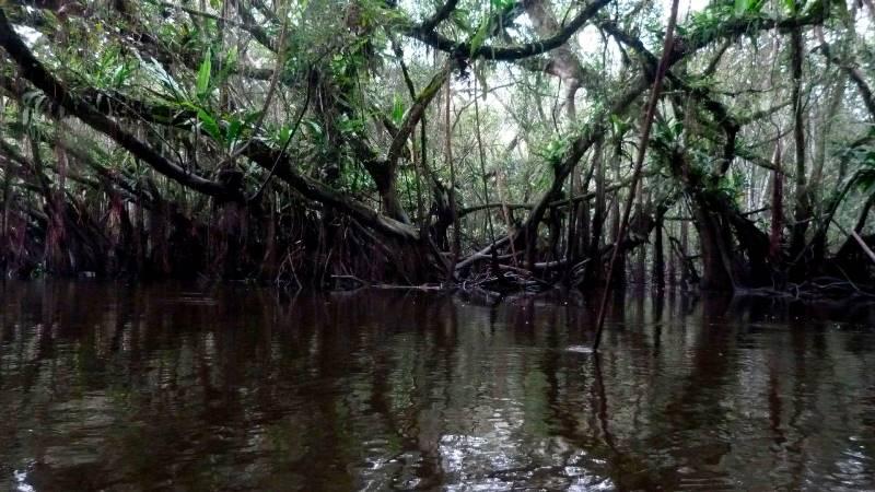 Bosques renacales del río Avisado en Reserva Tingana. (Foto: Andrea García).