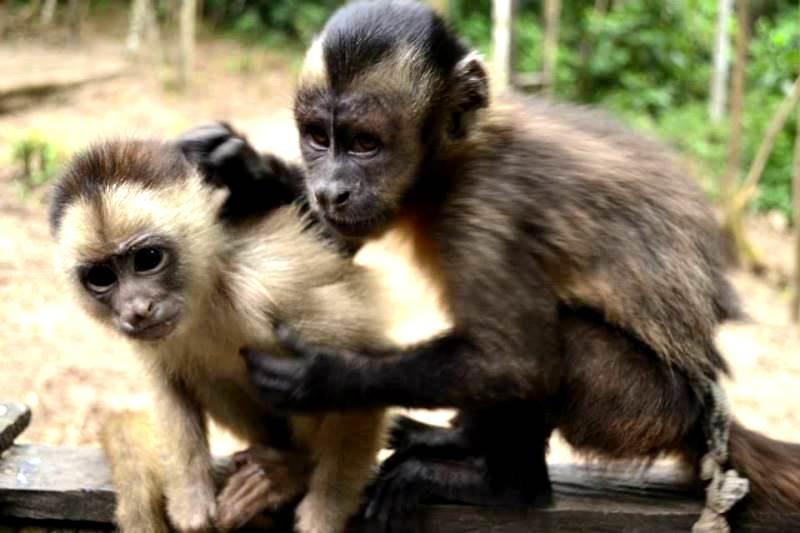 Yura y Francisco. (Foto: Katia Yoza).