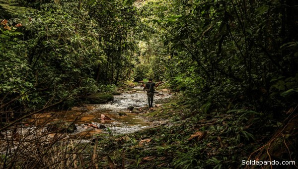 PROTEGIDOS. Los bosques peruanos requieren de normas e iniciativas que impulsen su protección y cuidado, tanto ambiental como económicamente. (Foto: soldepando.com)